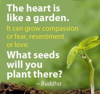 SeedsInTheHeart