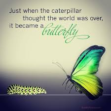butterflychangequote
